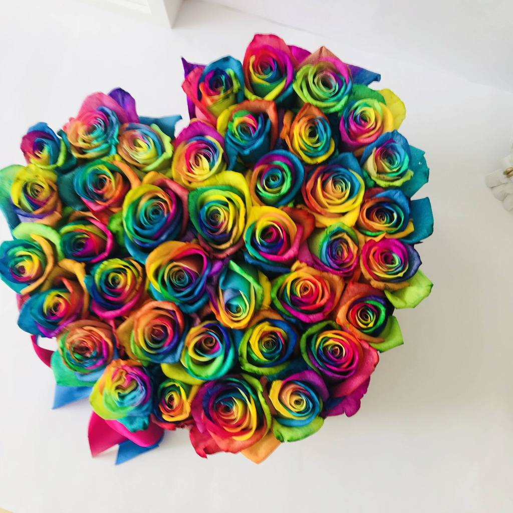 Rosa Arco Iris | variedad de la rosa